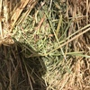 New Season Oaten Hay For Sale in 8x4x3's