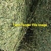 WANTED Good quality Lucerne Hay 8x4x3 bales