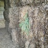 Last Seasons Vetch Hay 640kg 8x4x3 Bales