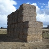 For Sale Canola Straw approximately 200 (8x4x3) big squares