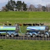 Focus On The Payout Hurting NZ Dairy Farmers