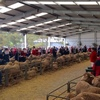East Bungaree Top Horn and Poll Ram each make $14,000