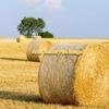 Biodynamic Barley straw .  Expression of interest