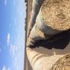 Sorghum stubble hay bales 4x4