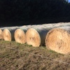 Ryegrass & Clover Hay