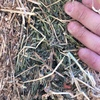 2ND cut Lucerne Hay for Sale in 8x4x3's