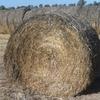 200 x Round Bales of Balansa Clover and Ryegrass Hay