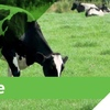 CS Pasture Liquid Fertiliser For Sale P, K, Ca and micro-nutrients- Magnesium, Copper, Zinc, Manganese, Sulphur, Boron, Cobalt, Nickel and Molybdenum