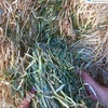 100m/t Clover/Rye Hay 500-550kg approx. 8x4x3 Bales