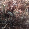 330 Bales of Good Vetch hay for sale Ex or Del