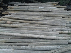 500 x 10ft x 4inch Pine Posts (Ex orchard trellis )