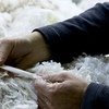 Wool market kicks vack into gear with a 43 cent rise in the South
