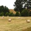 Round Hay Bales