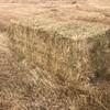 Under Auctyion - Balansa / Ryegrass 3x3x8