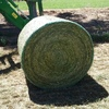 Hay and silage for sale