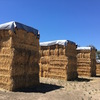 Clover/Rye Large Squares, Oaten Hay Large Squares