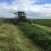 New Season Vetch Hay