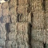 Under Auction - This Season Rye Grass Hay - small squares in packs of 21 - Approximately 1000 - To Be SOLD by the Bale
