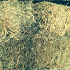 1,500 Small Bales of Top Quality Oaten / Vetch Hay For Sale