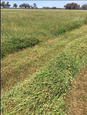 Sub Clover & Rye hay for sale.