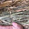 Oaten Hay For Sale in 8x4x3's