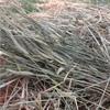 Barley / Rye Hay Rolls For Sale
