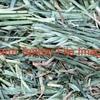 100mt Oaten / Vetch / Rye Hay Mix For Sale in 8x4x3's