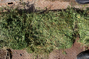 Lucerne / Teff Grass Small Square Bales