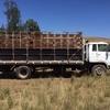 ISUZU Livestock Truck