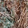 Vetch Hay for Sale: 8x4x3 and 7x4x3