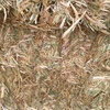Barley Straw Excellent Quality