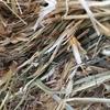 Good Oaten Hay Rolls For Sale