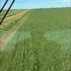 Organic oaten/ rye