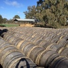Rye grass / wheatern rolls