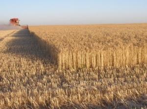 Identifying Grain export opportunities