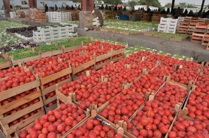 Vegetable exports average growth of ten percent each year