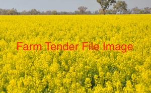 22mt Of Gm Canola For Sale
