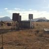 Border Collie Western District Working Line
