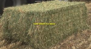 130mt Barley Hay 730kg 8x4x3 Bales