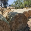 Wheaten Hay Round Bales. Price per Bale + GST.  New Season