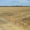 HD irrigated wheat straw bales
