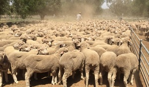 WANTED 10-15 x Wethers any age/breed