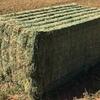 Vetch Hay 8x4x3 - 2,000  x 690 KG Approx Bales