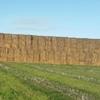 Wheaten Hay 8x4x3 -1,000 x Heavy Bales ### Old Season ###