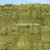1200 Oaten Hay Small Square Bales