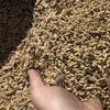 Popany Vetch Barley Mix For Sale