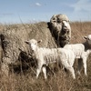 Mecardo Analysis - Survey results defying the drought