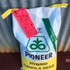 Pioneer 43Y23 Roundup Ready Canola Seed
