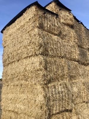 350mt Wheaten Hay 720kg 8x4x3 Bales