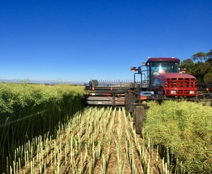 Windrow  Contracting Wanted